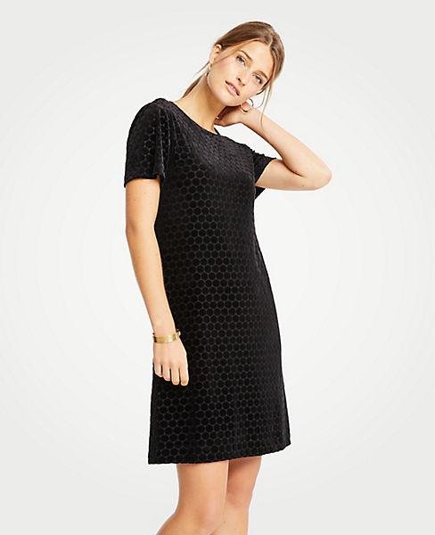 Petite Velvet Dot T-Shirt Shift Dress