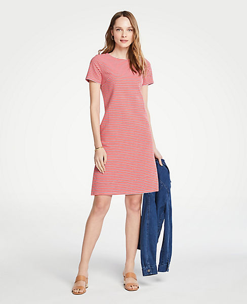 Stripe Knit Short Sleeve Shift Dress