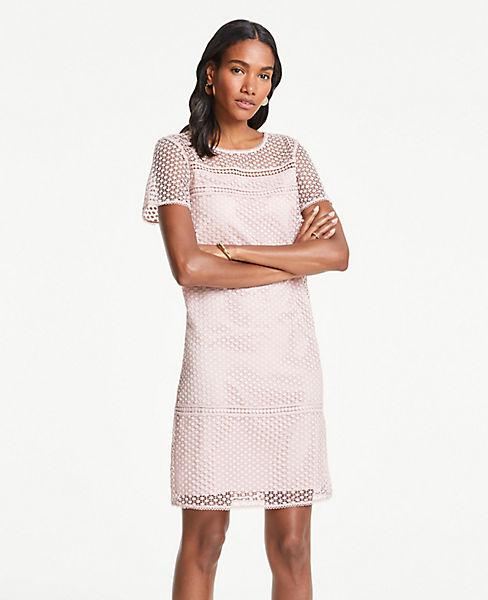 Lace T Shirt Shift Dress by Ann Taylor
