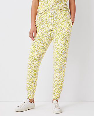 Ann Taylor The Sweatshirt Jogger Pant In Ivory Multi